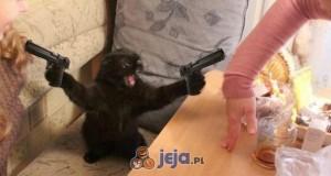 Kot w akcji