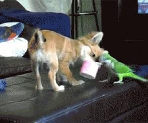Oddawaj, to moje!