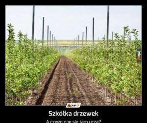 Szkółka drzewek
