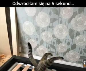 I za to kocham koty