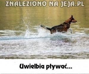 Wewnętrzne sprzeczności każdego psa