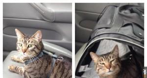 Przed i po wizycie u weterynarza