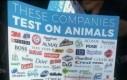 Kiedy firmy testują swoje produkty na zwierzętach