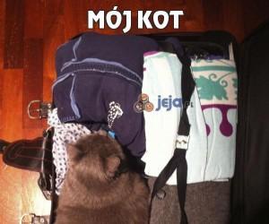Mój kot