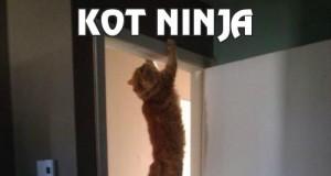 Kot ninja