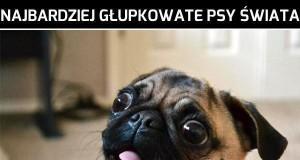 Najbardziej głupkowate psy