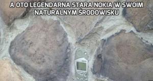 A oto legendarna stara Nokia w swoim naturalnym środowisku