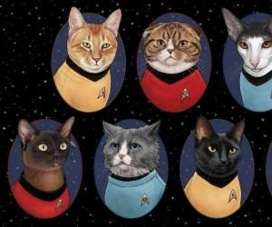 Kosmiczna drużyna