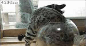 Koty to ciecze cz. II