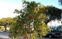 Młode drzewo