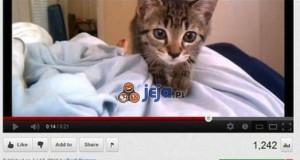 Kto nie lubi kotów?