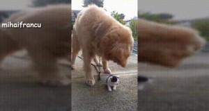 Pies i obiad