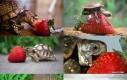 Żółw i truskawka
