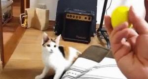 Jak odstraszyć kota