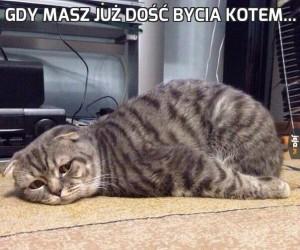 Gdy masz już dość bycia kotem...