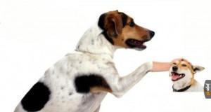 Głaskanie psa
