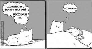 Prawdziwa kocia miłość