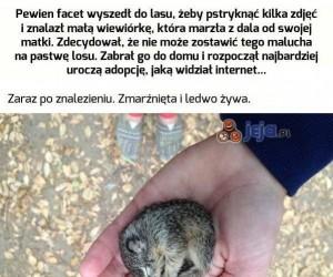 Przygarnij wiewiórkę - najsłodsza historia