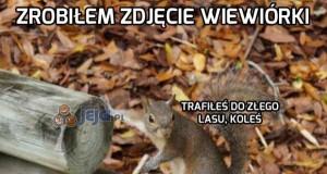 Wiewiórka gangster
