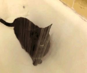 Dość nietypowy kot
