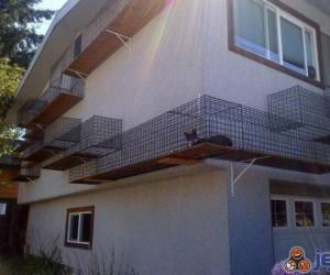 Dom przystosowany dla kota