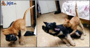 Wojna kota i psa