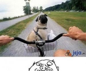 Pies w rowerowym koszyku