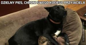 Dzielny pies, chroni swego kociego przyjaciela
