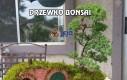 Drzewko Bonsai i dom Hobbita