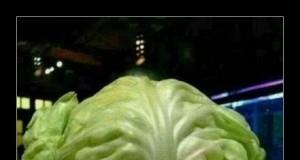 Nowe danie w chińskich knajpkach