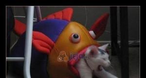 Ryby wzięły odwet