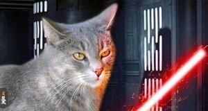 Niech kot będzie z Tobą!