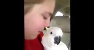 Papugi są fajne