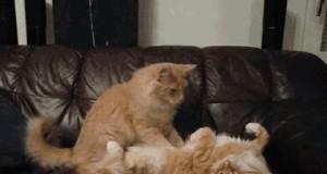 Koci masaż