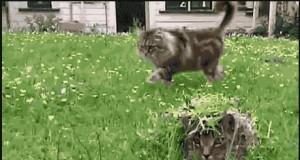 Zakamuflowany kot
