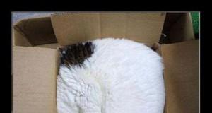 Kot spakowany WinRarem