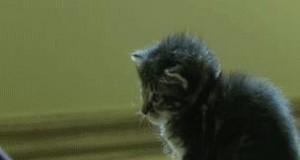 Wyłączanie kota