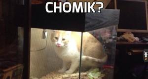 Chomik?