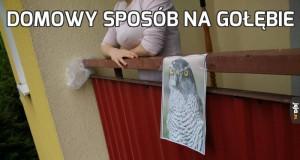 Domowy sposób na gołębie