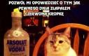 Koteł taki pijany
