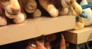 Mufasa i Skaza