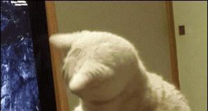 Kot odkrywa CD-ROM w Macu
