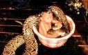 Za pan brat z wężem