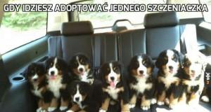 Gdy idziesz adoptować jednego szczeniaczka