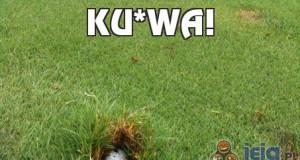 Ku*wa!