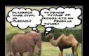 Słoń vs Wielbłąd