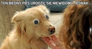 Ten biedny pies urodził się niewidomy, jednak...