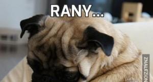 Rany...