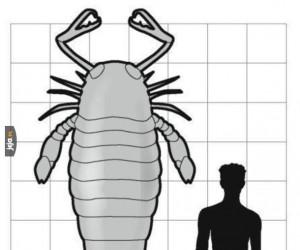 Prehistoryczny skorpion