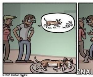 Marzenia psa